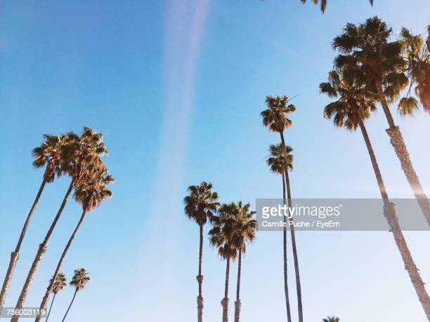 low angle view of palm trees against blue sky - santa monica los angeles foto e immagini stock