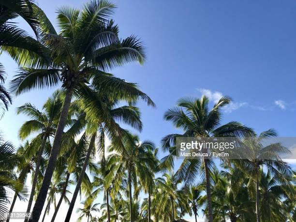 Low Angle View Of Palm Trees Against Blue Sky