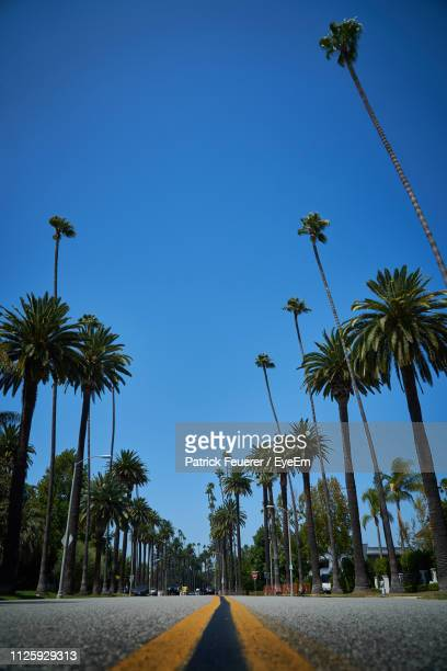 low angle view of palm trees against clear blue sky - beverly hills foto e immagini stock