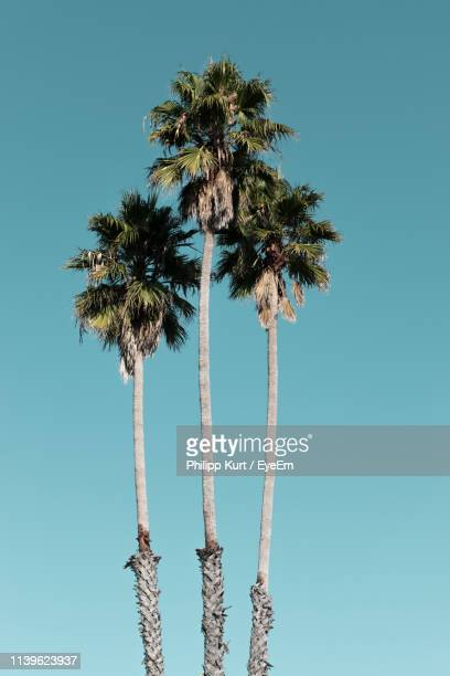 low angle view of palm trees against clear blue sky - palm tree stock pictures, royalty-free photos & images