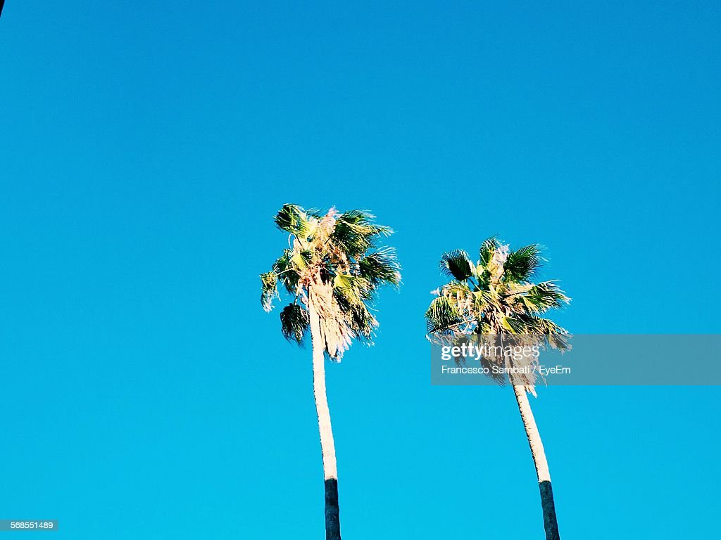 Low Angle View Of Palm Trees Against Clear Blue Sky : Stock Photo