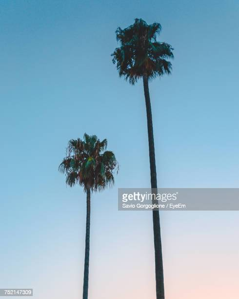 Low Angle View Of Palm Trees Against Clear Blue Sky