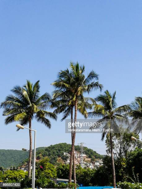 low angle view of palm trees against clear blue sky - ヴィシャカパトナム ストックフォトと画像