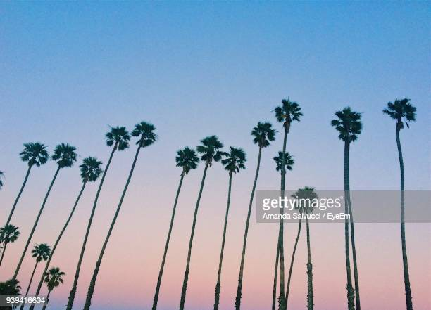 low angle view of palm trees against clear blue sky - california photos et images de collection