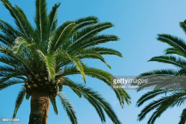low angle view of palm trees against clear blue sky - elia karli stock-fotos und bilder