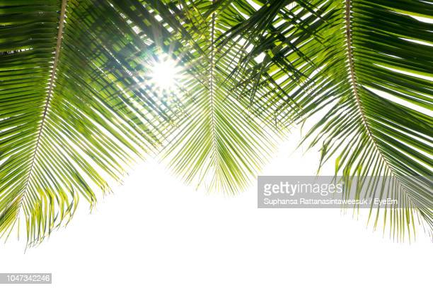 low angle view of palm trees against clear sky - coconut palm tree stock pictures, royalty-free photos & images
