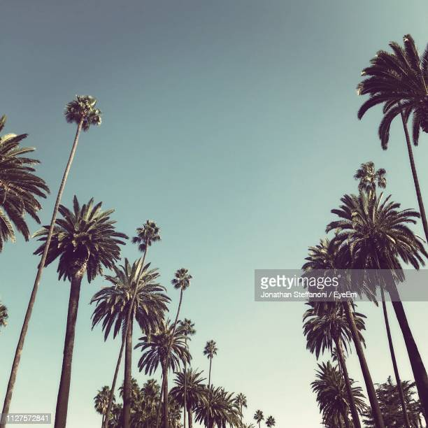 low angle view of palm trees against clear sky - palm tree stock pictures, royalty-free photos & images