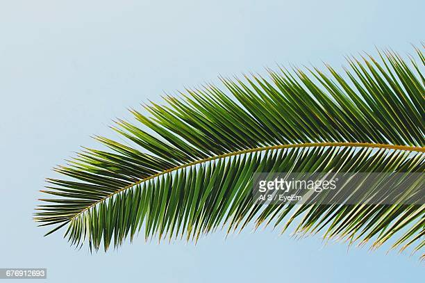 low angle view of palm trees against clear sky - palm leaf stock pictures, royalty-free photos & images