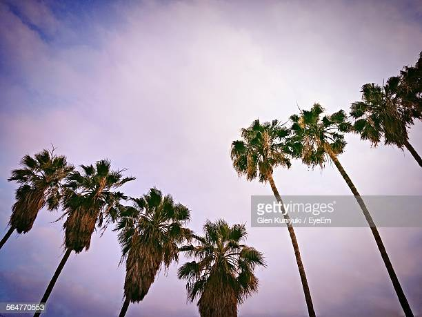Low Angle View Of Palm Trees Against Cloudy Sky