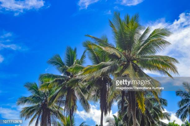 low angle view of palm trees against sky - imagebook stock pictures, royalty-free photos & images