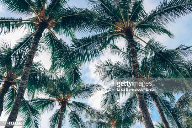 low angle view of palm trees against sky - オアフ島 ストックフォトと画像