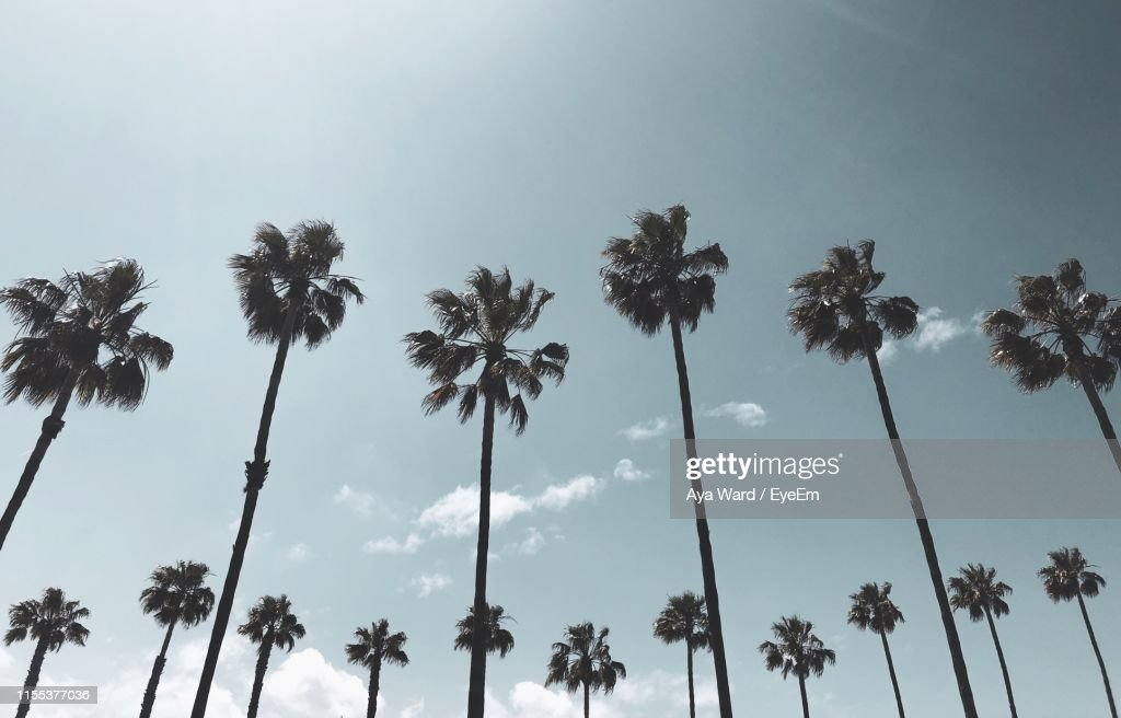 Low Angle View Of Palm Trees Against Sky : ストックフォト