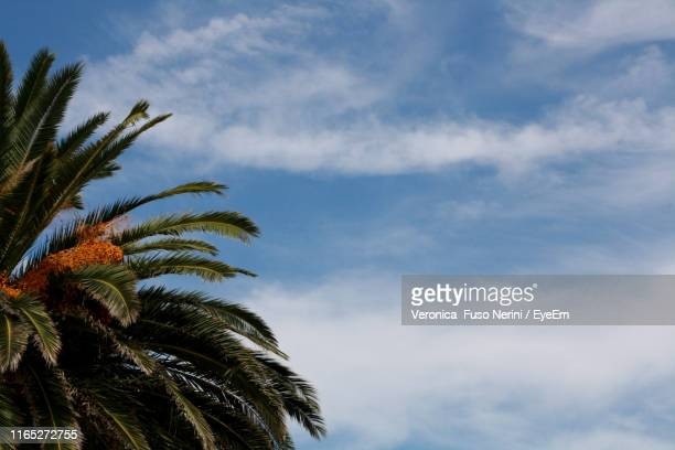 low angle view of palm trees against sky - date palm tree stock pictures, royalty-free photos & images