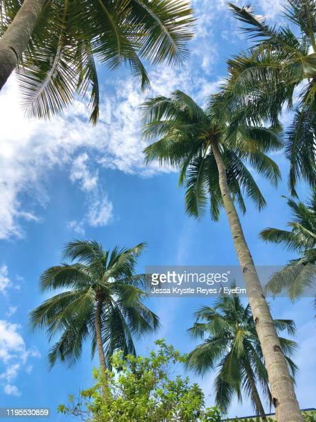 low angle view of palm trees against sky - jessa stock pictures, royalty-free photos & images