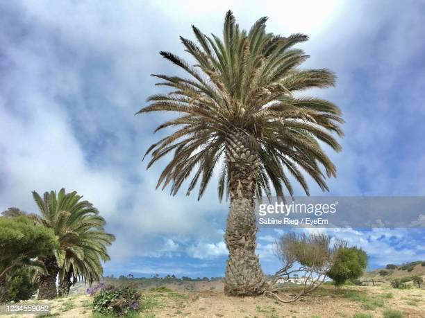 low angle view of palm trees against sky - rancho palos verdes stock pictures, royalty-free photos & images