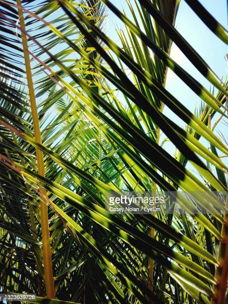 low angle view of palm trees against sky - casey nolan stock pictures, royalty-free photos & images