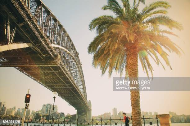 low angle view of palm trees against sky - sydney harbour bridge stock pictures, royalty-free photos & images
