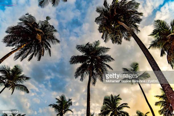 low angle view of palm trees against sky - abidjan stock pictures, royalty-free photos & images