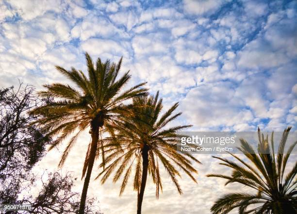 low angle view of palm trees against sky - sharon plain stock pictures, royalty-free photos & images