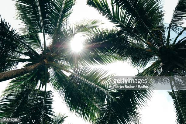 low angle view of palm trees against sky - coconut palm tree stock pictures, royalty-free photos & images