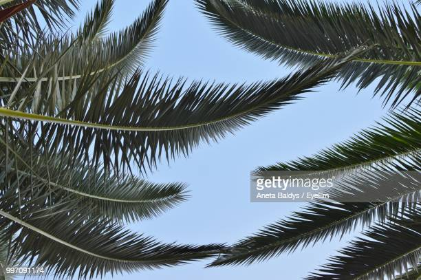 low angle view of palm trees against sky - aneta eyeem stock pictures, royalty-free photos & images