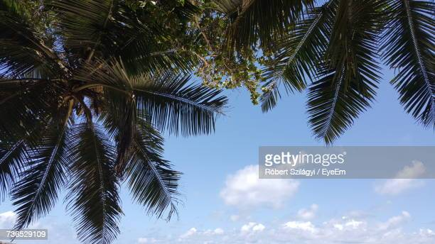 Low Angle View Of Palm Trees Against The Sky