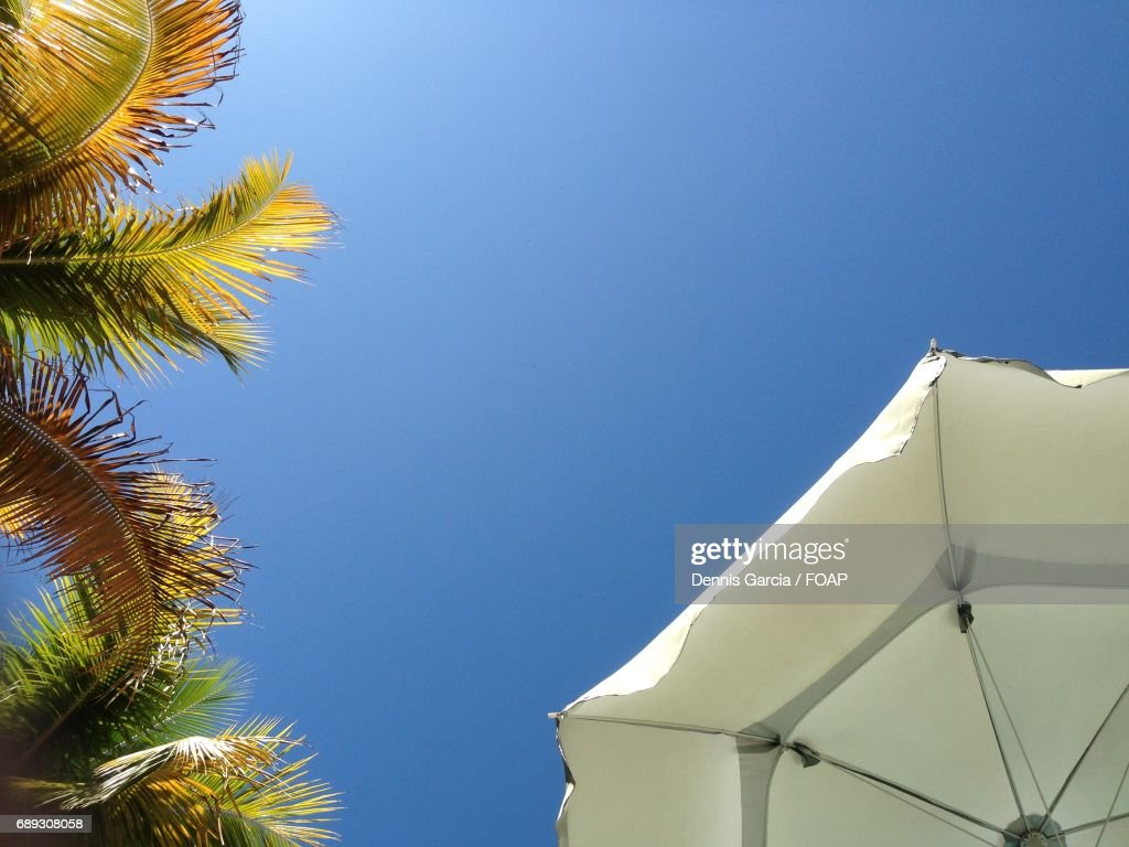 Low angle view of palm trees and beach umbrella : Stock Photo