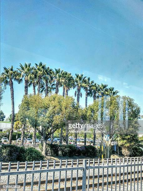 low angle view of palm trees and fence against blue sky - compton california stock pictures, royalty-free photos & images