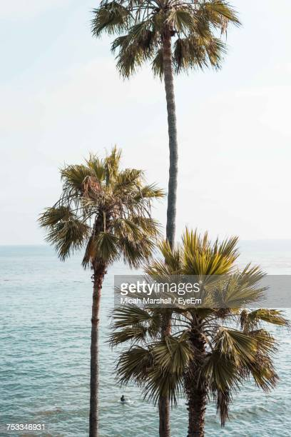 Low Angle View Of Palm Trees At Beach Against Sky