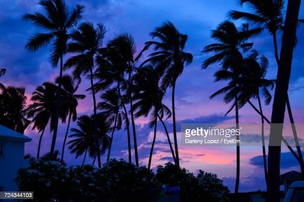 Low Angle View Of Palm Trees At Sunset
