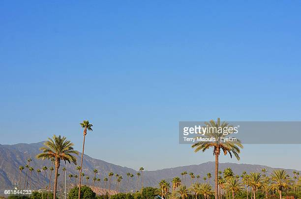 low angle view of palm trees growing against clear blue sky - pasadena stock pictures, royalty-free photos & images