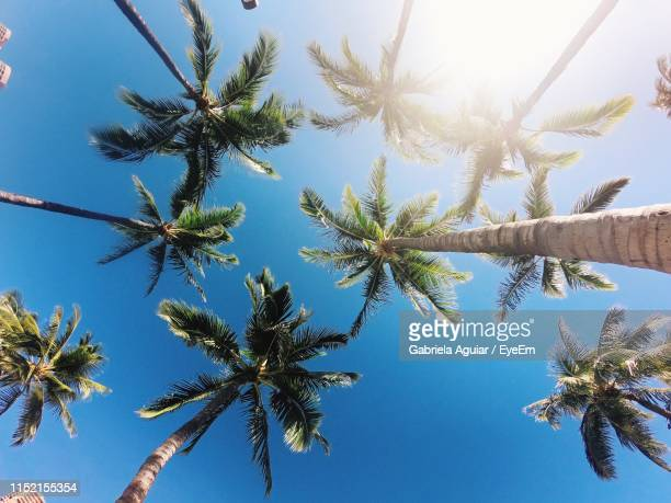 low angle view of palm trees growing against clear sky - honolulu stock pictures, royalty-free photos & images