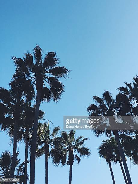 Low Angle View Of Palm Trees Growing Against Clear Sky