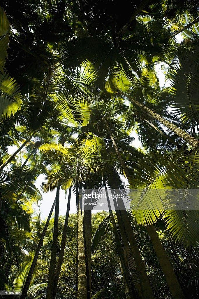 Low angle view of palm trees in a botanical garden, Hawaii Tropical Botanical Garden, Hilo, Big Island, Hawaii Islands, USA : Foto de stock