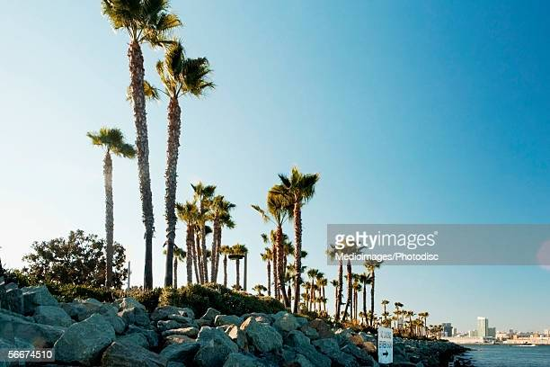 Low angle view of palm trees lining the bay, San Diego, California, USA