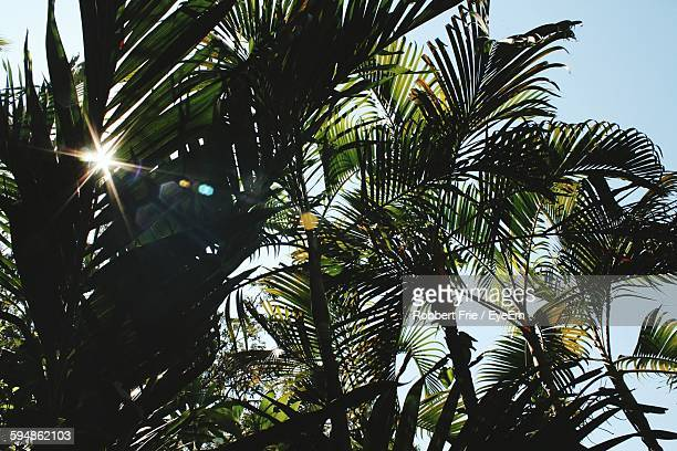 Low Angle View Of Palm Trees On Sunny Day