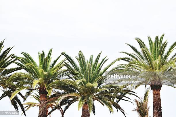 low angle view of palm trees - date palm tree stock pictures, royalty-free photos & images