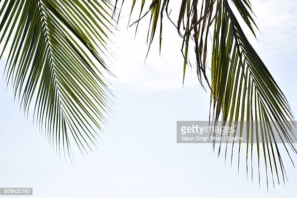 low angle view of palm trees - palm branch stock pictures, royalty-free photos & images