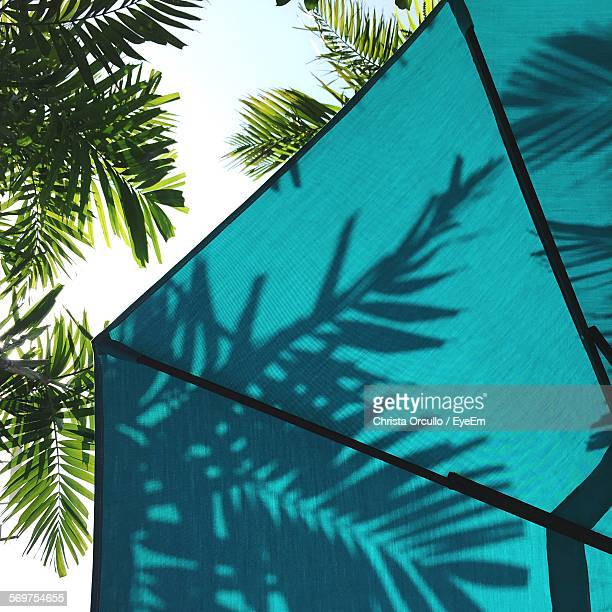 Low Angle View Of Palm Trees Shadow Falling On Umbrella