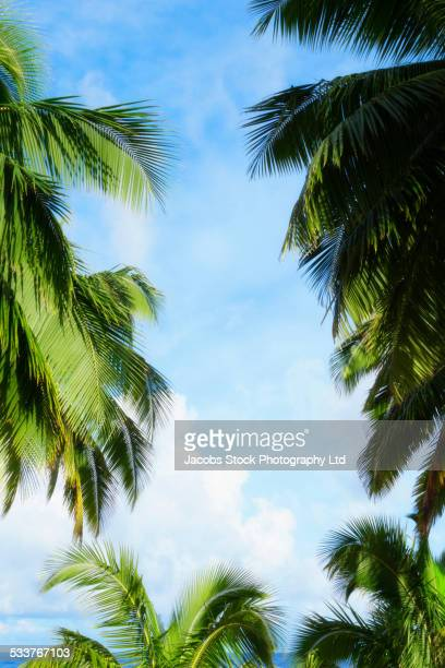 Low angle view of palm trees under blue sky