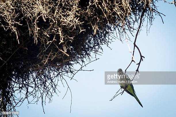 Low Angle View Of Parrot Perching On Branch Against Sky