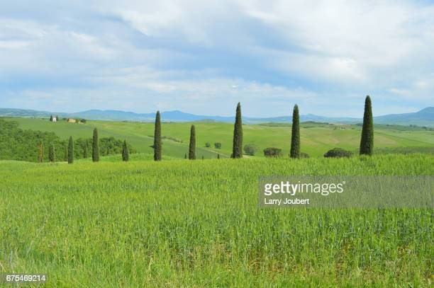 low angle view of pasture with row of cypress trees in the middle and bell tower in the very back - san quirico d'orcia stock pictures, royalty-free photos & images