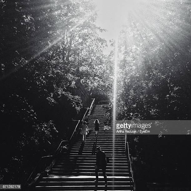 low angle view of people walking on steps amidst trees on sunny day - pomorskie province stock photos and pictures