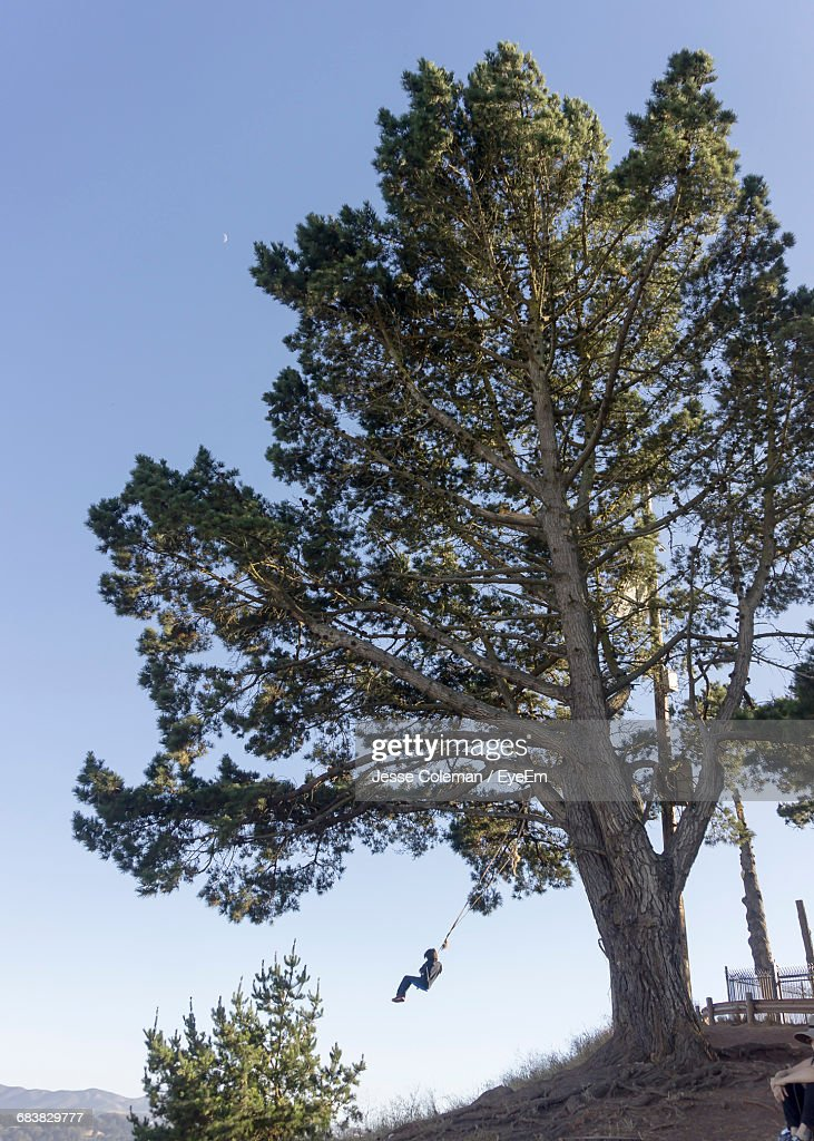 Low Angle View Of Person Swinging With Rope On Tree : Foto de stock