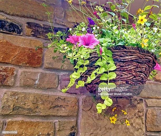 low angle view of petunias flowers in hanging basket by stone wall - hanging basket stock pictures, royalty-free photos & images