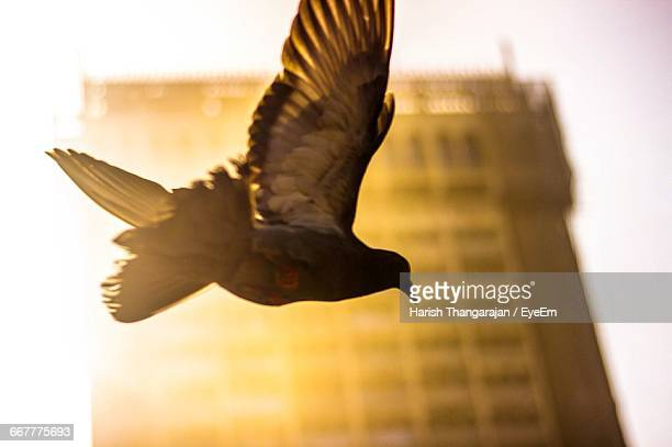 Low Angle View Of Pigeon Flying Against Taj Mahal Tower