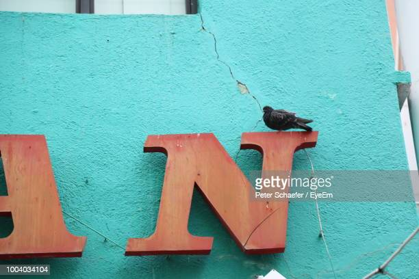 low angle view of pigeon perching on sign - letter n stock pictures, royalty-free photos & images