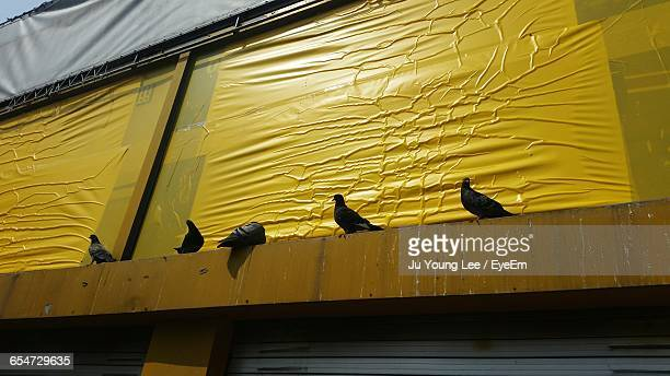 Low Angle View Of Pigeons Against Yellow Billboard