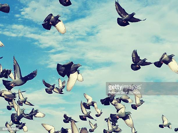 Low Angle View Of Pigeons Flying Against Cloudy Sky