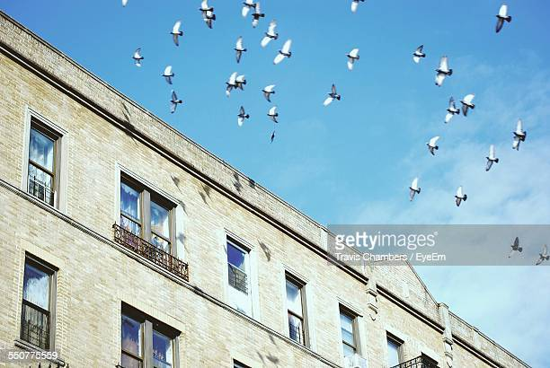 Low Angle View Of Pigeons Flying Over Building